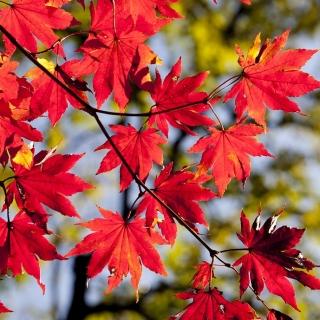 Dni wolne od pracy autumn-2789234_1280