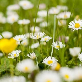 Biuro jest nieczynne w dniach 30.04.- 04.05 daisies-1549930_1920