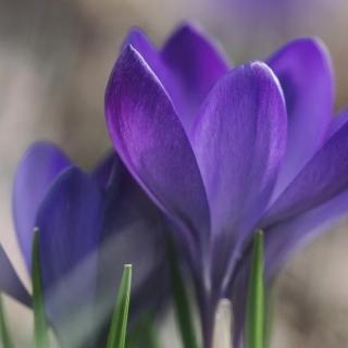 Pierwszy dzień wiosny na świecie poczatek-wiosny-na-swiecie