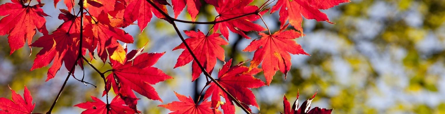 autumn-2789234_1280